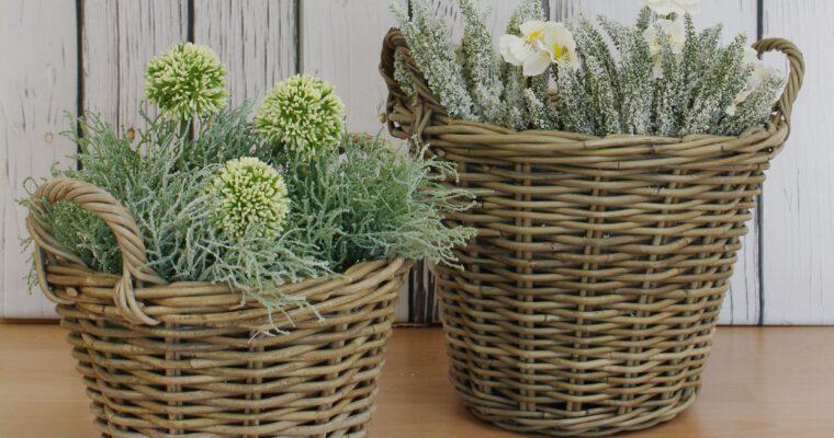 Vielseitige Pflanztipps für die kalte Jahreszeit