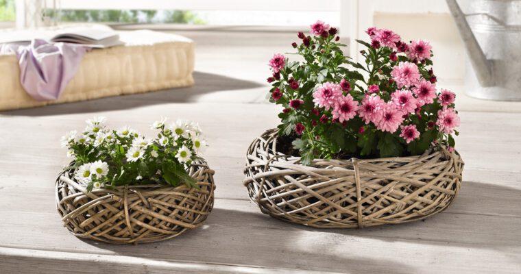 Zum Tag der Primel: Pflanzkörbe mit Frühlingsblumen