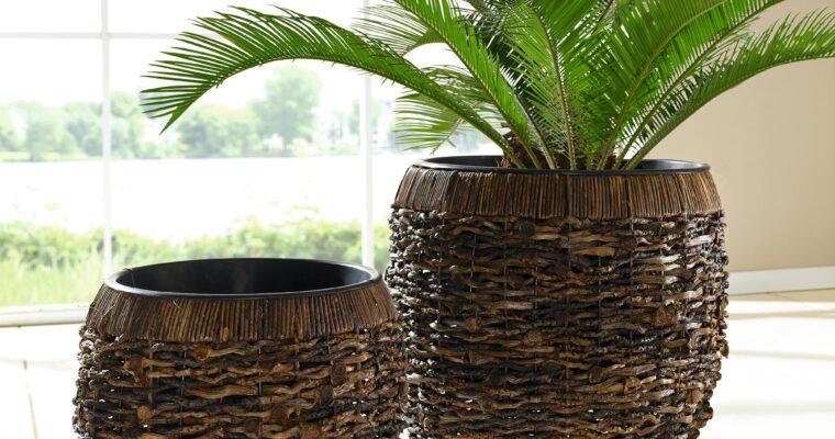 Baumpflanzen in Pflanzkübeln leichtgemacht: 10 Tipps