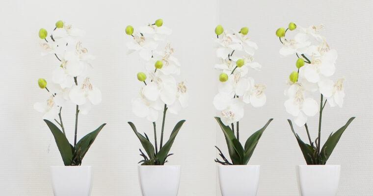 Kunstpflanzen – frische Farben das ganze Jahr über
