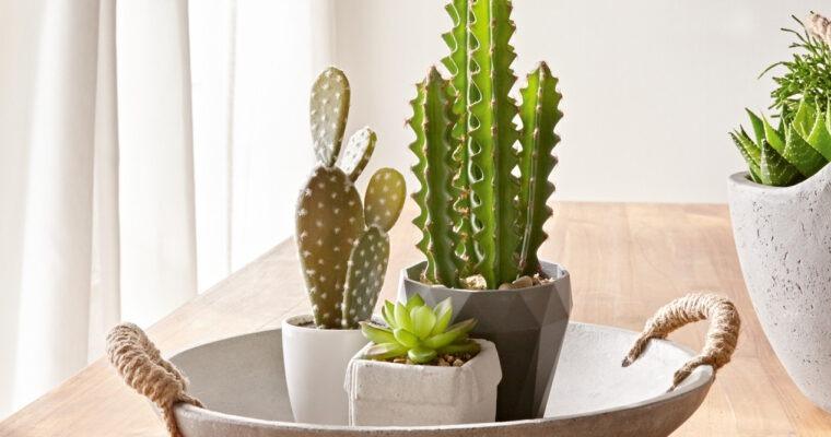 Ambiente & Design – Unser Deko-Tipp: Bitte nicht gießen