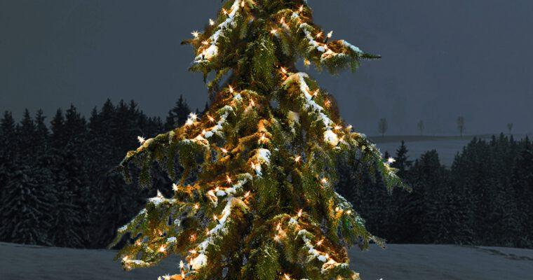 Tricks zu Kauf und Pflege eines Christbaums im Topf