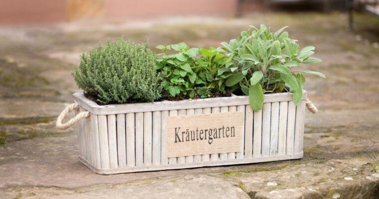 Frische Ernte: clevere Gemüseplanung für das Gartenjahr