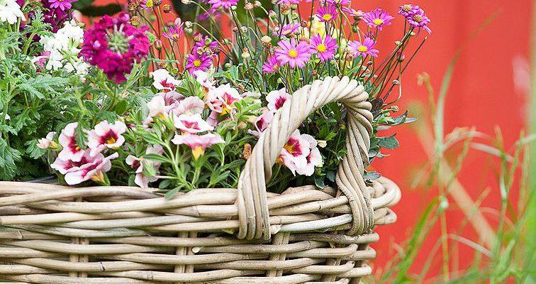 Blumenbeet anlegen: Tipps & Tricks für Ihren Garten