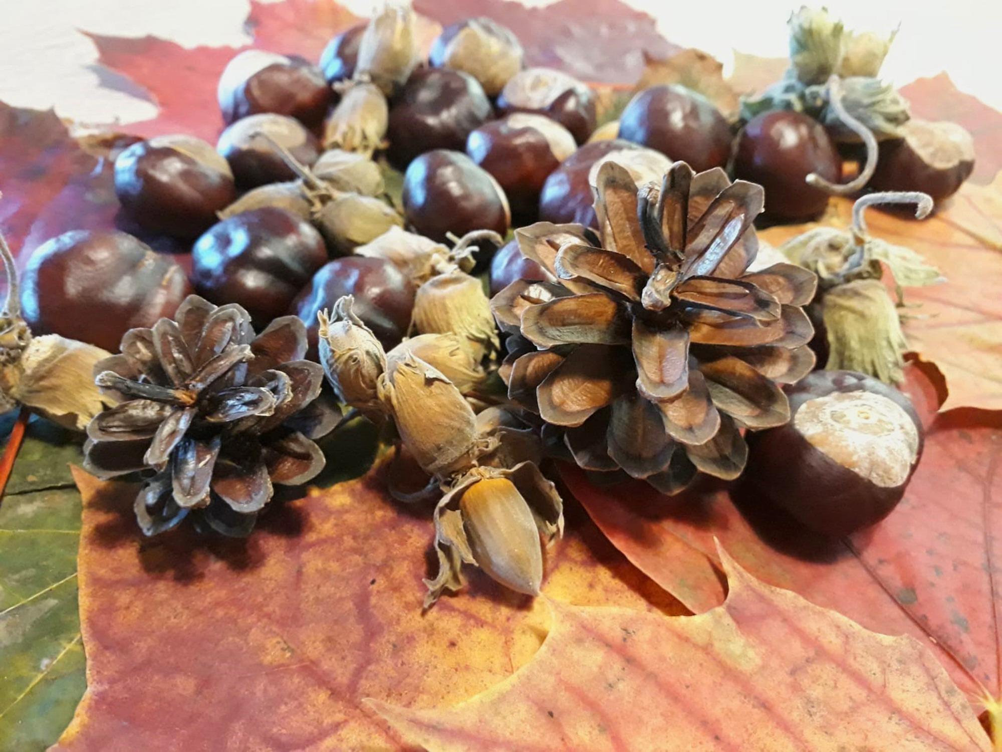 Herbstliches Basteln mit Tannenzapfen, Kastanien & Co.