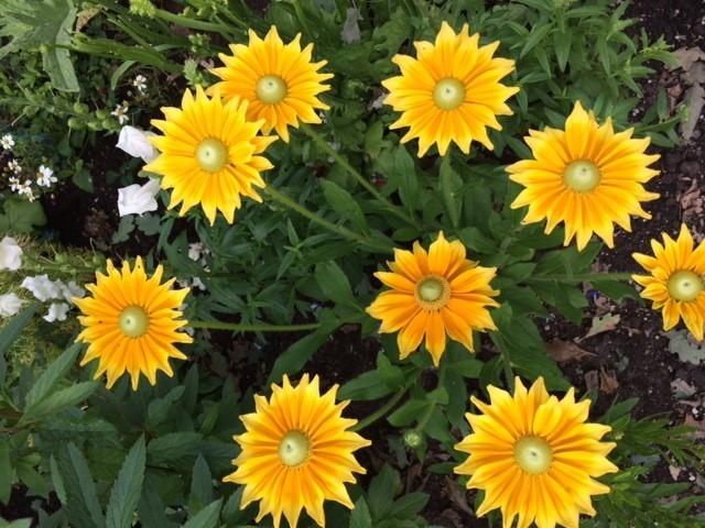 Insektenhotel und Blumen für Bienen – die besten Tipps