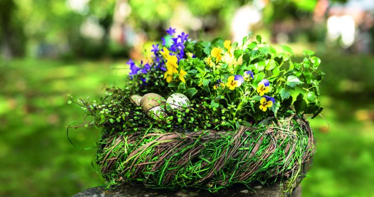 Frühblüher: Krokusse, Märzenbecher, Primeln und Co.