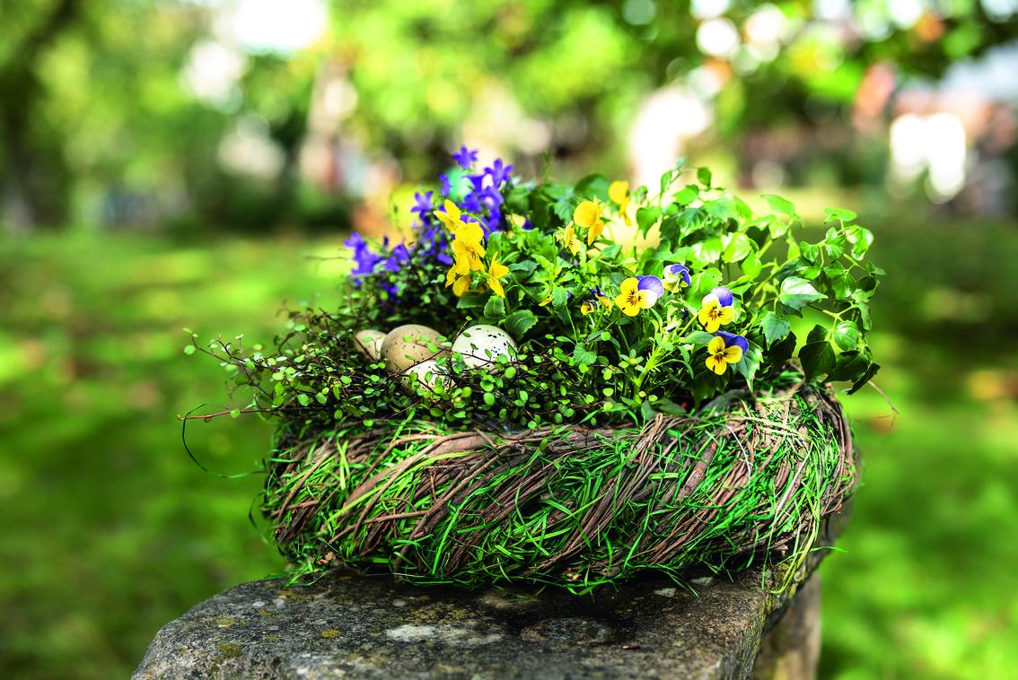 Osternest, Frühlingsblüher